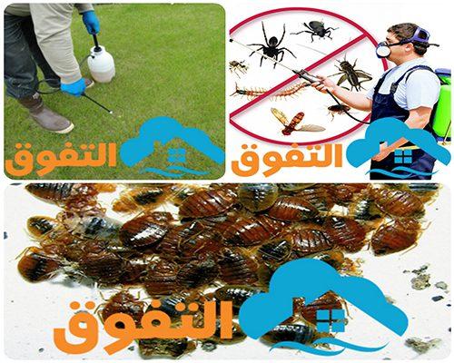 شركة مكافحة الصراصير فى الرياض
