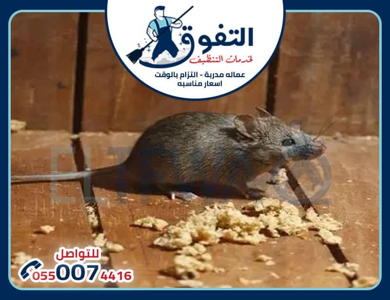 مكافحة الفئران بالخرج