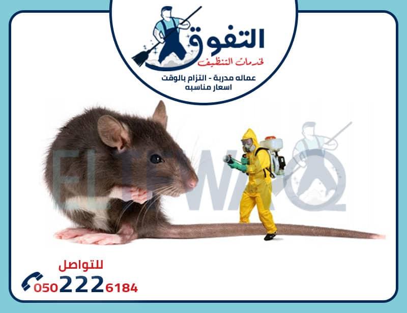 مكافحة فئران الرياض